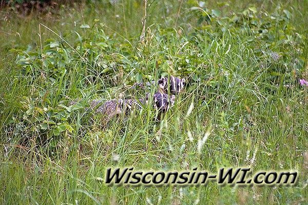 Photo of Wisconsin Badgers