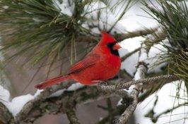 Wisconsin Bird Photos