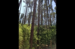 1889057, Wisconsin Dells Building Site for Sale in Tall Pines